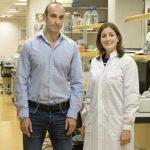 Investigadores del CNIO encuentran una protección ante los efectos secundarios de la radioterapia